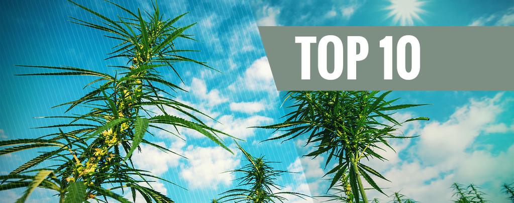 Top 10 Hoogproductieve Feminized Cannabis Soorten