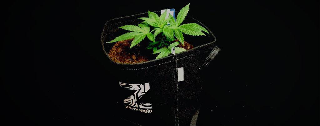 De Voordelen Van Stoffen Potten Voor Het Kweken Van Wiet