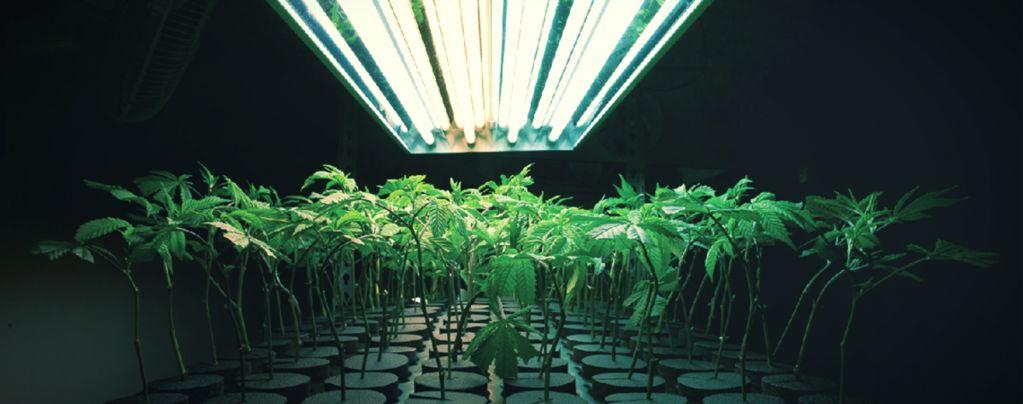 Wat Is Een Inert Groeimedium Bij Wiet Kweken?