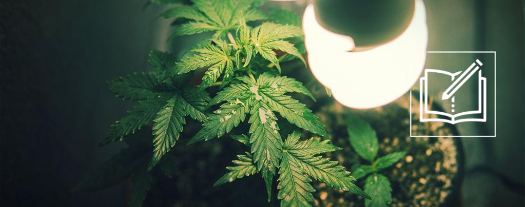 Alles Wat Je Moet Weten Over Micro Growing Cannabis