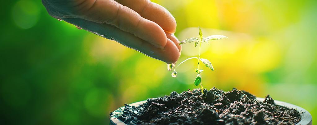 Compostthee: De Natuurlijke Booster Voor Je Cannabisplanten