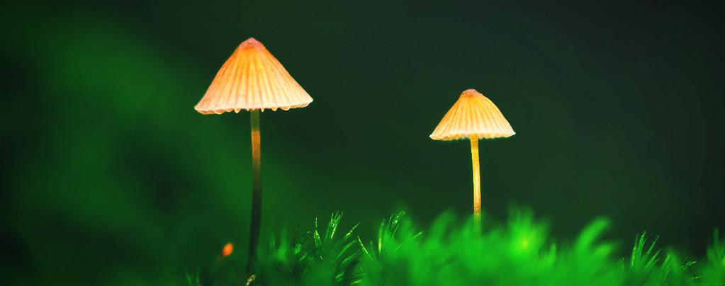 Magische paddestoelen in de buitenteelt