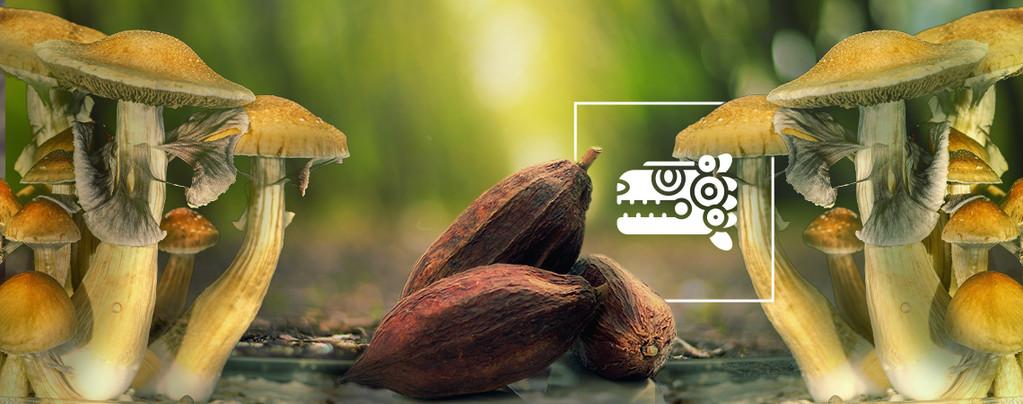 De Aztec Combo: Paddestoelen & Cacao