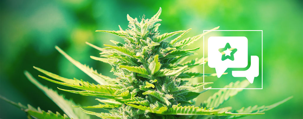 Soort review: ChemDawg