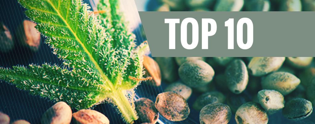 Onze 10 meest populaire zaadbanken