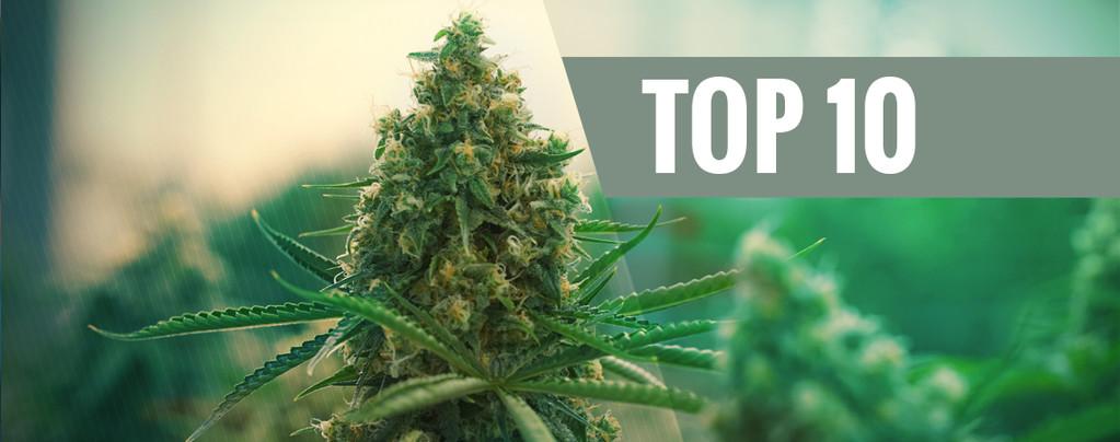 Onze Top 10 Beste Cannabis Varianten