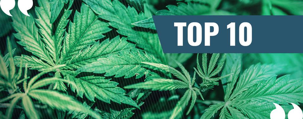 Top 10 Beste Marihuana Citaten Aller Tijden!