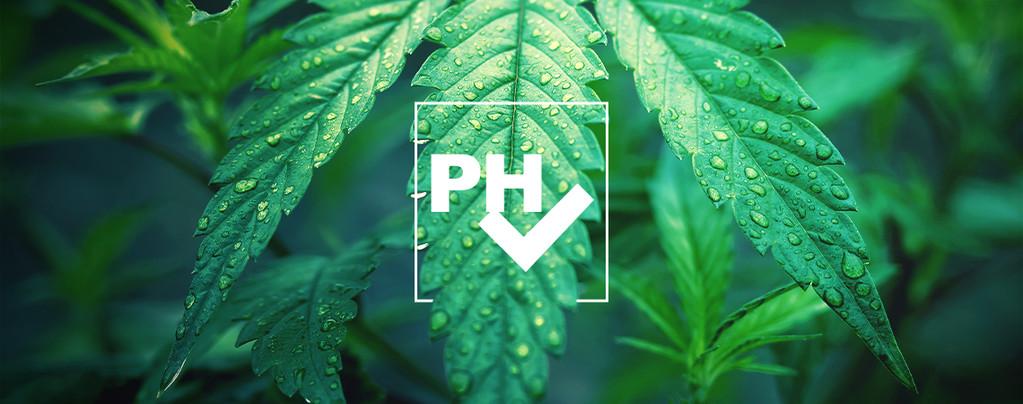 pH-waarde Aanpassen Kweken Van Cannabis