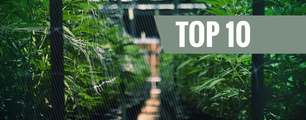 Onze Top 10 Automatische strains voor buiten