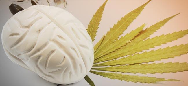 Cannabis Effecten Hersenen