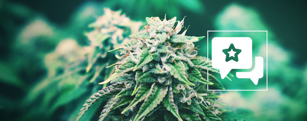 Agent Orange: Cannabis Strain Review & Informatie