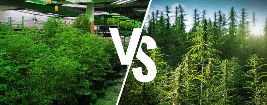 Binnenteelt vs. Buitenteelt Cannabis