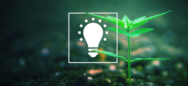 7 Eenvoudige Tips Om Betere Wiet Te Kweken