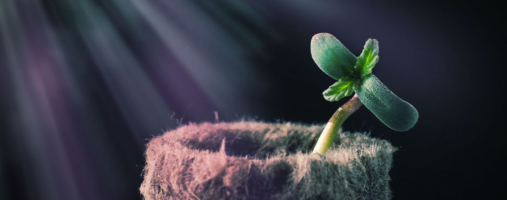 Grow Tip: Het Lichtspectrum Begrijpen