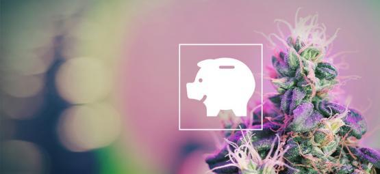 Hoe Kun Je Wiet Kweken Met Een Budget