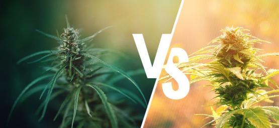 Wat Is Het Verschil Tussen Cannabis En Hennep?