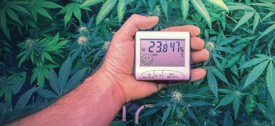De Ultieme Temperaturen Voor Het Kweken Van Cannabis