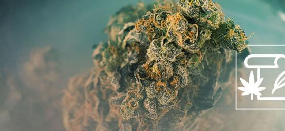 De Oorsprong Van Skunk Cannabis En De Top 3 Skunk Strains