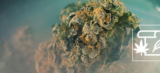 De Oorsprong Van Skunk Cannabis En De Top 3 Skunk Strains