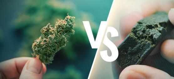Het Verschil Tussen Cannabis En Hasj