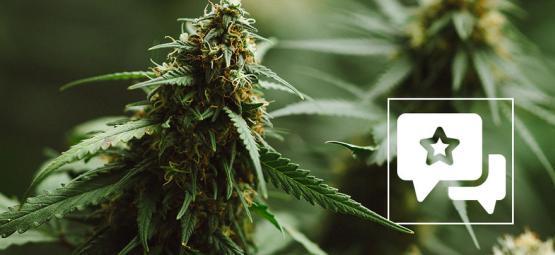Cannabis Soort Recensie: Power Plant