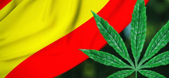 Regulatie verspreiding: Bilbao gaat cannabis clubs reguleren