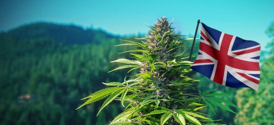 De Beste Cannabis Strains Om Buiten Te Kweken In Engeland