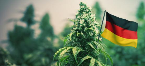 De Beste Cannabis Strains Om In Duitsland Buiten Te Kweken