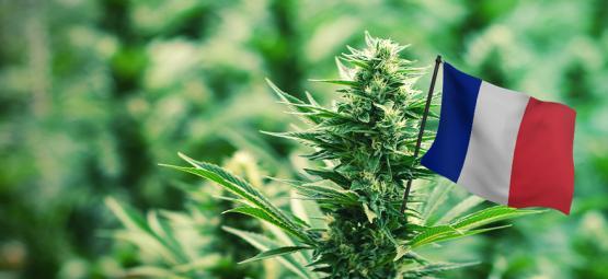 De Beste Outdoor Cannabissoorten Om In Frankrijk Te Kweken