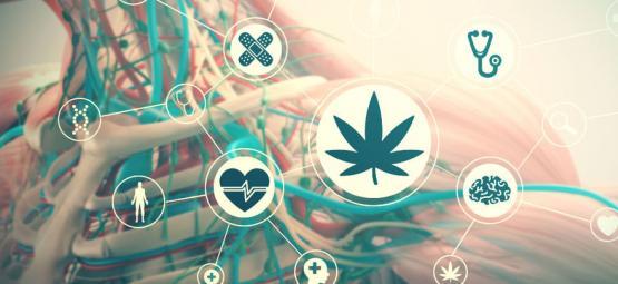 Effecten Van Cannabis Op Je Lichaam