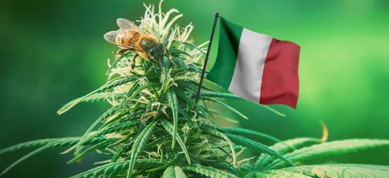 De Beste Cannabissoorten Om In Italië Buiten Te Kweken