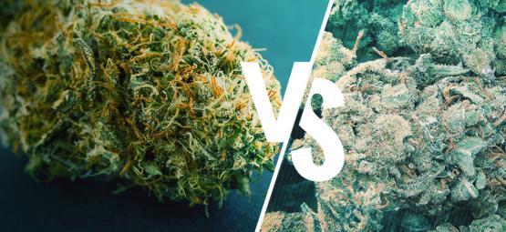 Goede vs Slechte wiet: Hoe ontdek je het verschil