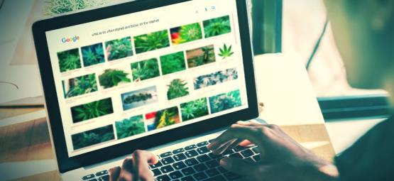 Wat Zijn De Beste Websites Voor Stoners?
