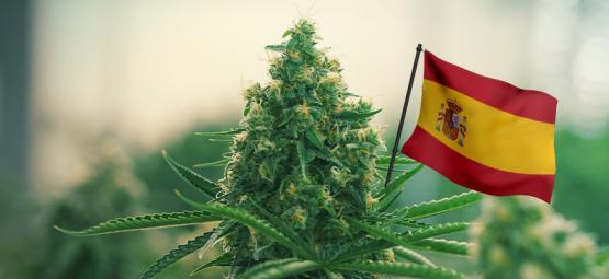 Beste Outdoor Cannabis Strains Om In Spanje Te Kweken