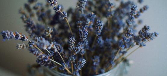 De Beste Kruiden Om Te Mixen Met Cannabis
