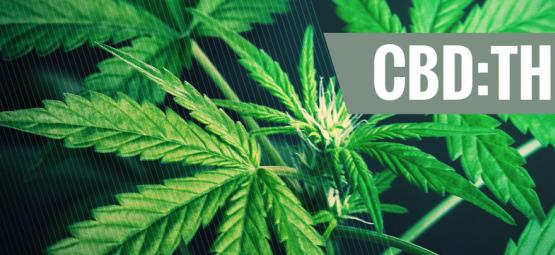 De Effecten Van Verschillende CBD:THC Verhoudingen