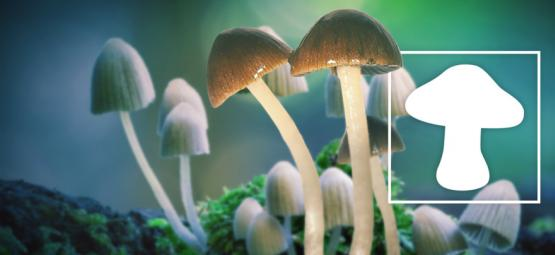 Magic Mushrooms Zijn De Veiligste Drugs