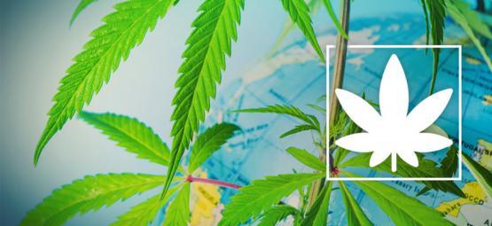 Waar Kun Je Legaal Cannabis Roken In Europa?