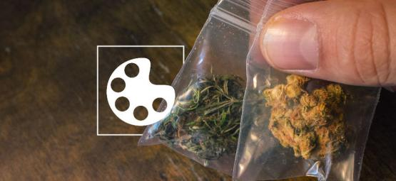 De Verschillende Kleuren Van Cannabis En Wat Ze Betekenen