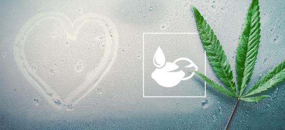 De Beste Cannabiszaden Voor Vochtige Klimaten