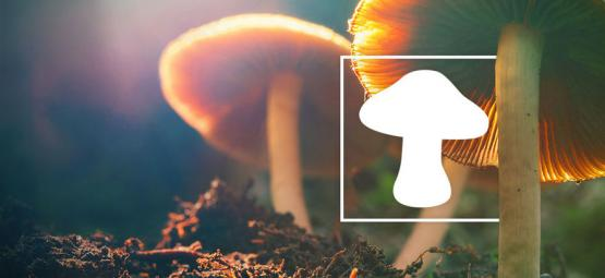 Hoe Je Verschillende Soorten Magic Mushrooms Identificeert