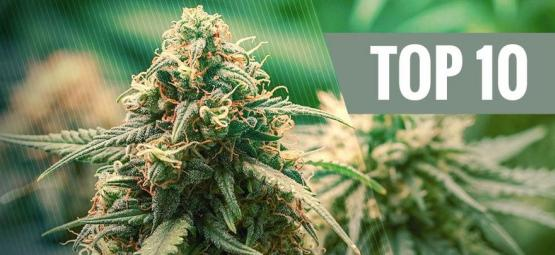 Top 10 Hybride Cannabis Soorten