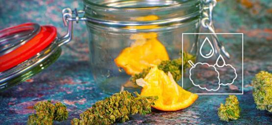 Hoe Rehydrateer Je Uitgedroogde Cannabistoppen?