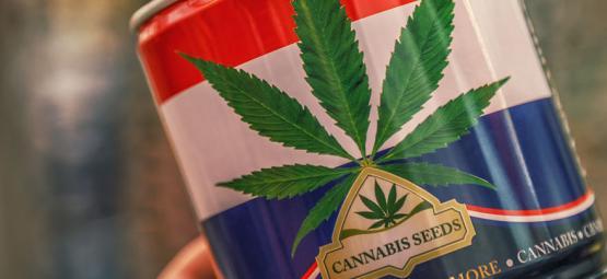 Nederwiet! Alles Over Nederlandse Wiet En De Top 3 Van In Nederland Ontwikkelde Cannabissoorten