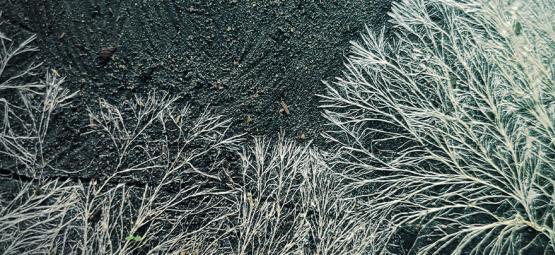 Wat Is Mycelium Bij De Kweek Van Paddo's?