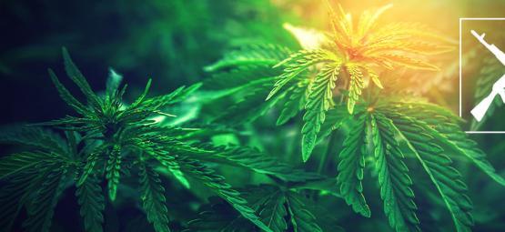De Origine Van AK-47 Cannabis En De Top 3 AK-47 Strains