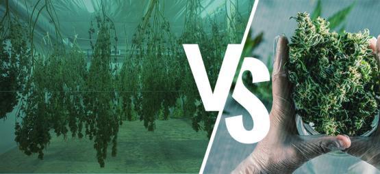 Nat Versus Droog Snoeien Van Je Cannabisplanten