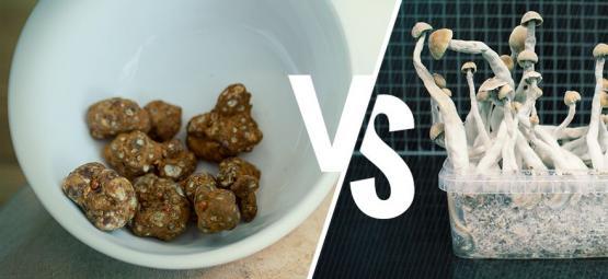 Magic Truffles VS Paddo's: En De Winnaar Is?