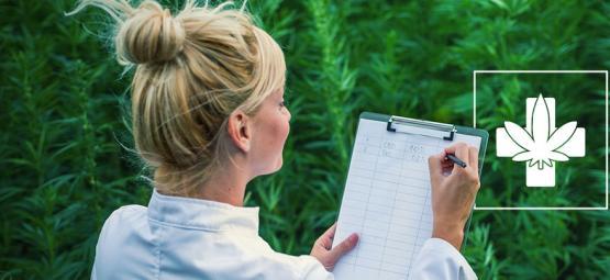 Hoe Je De Medicinale Strain Kiest Die Bij Jou Past