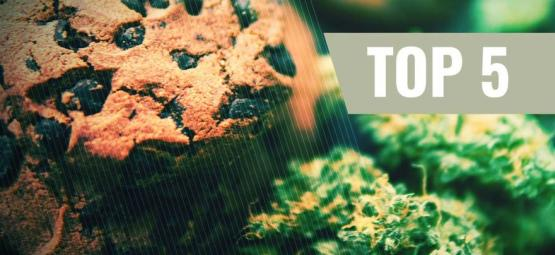 Top 5 Cannabis Koekjes Recepten